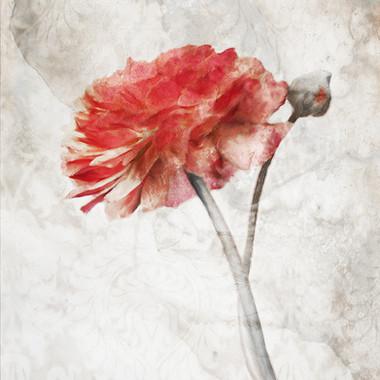Striking Scarlet Blossom