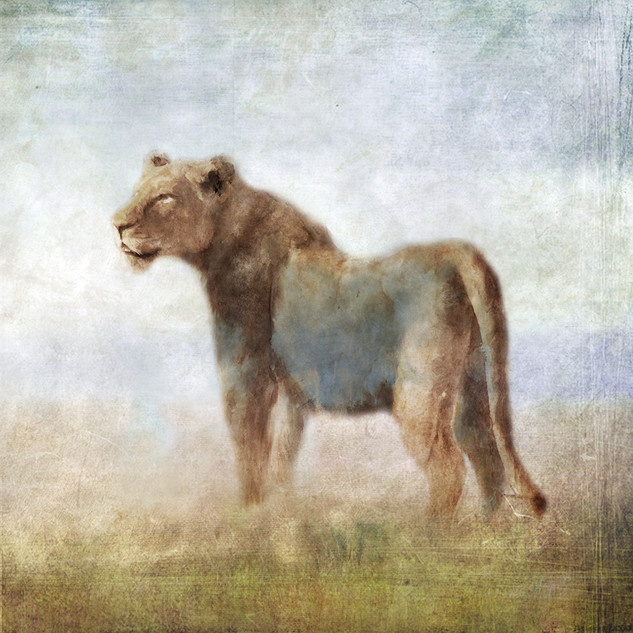 Serengeti Series Lioness