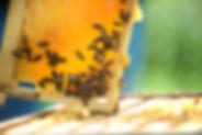 abeja, cera, apicultura, apicultor, colombia