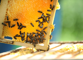3 things to know about raw organic honey