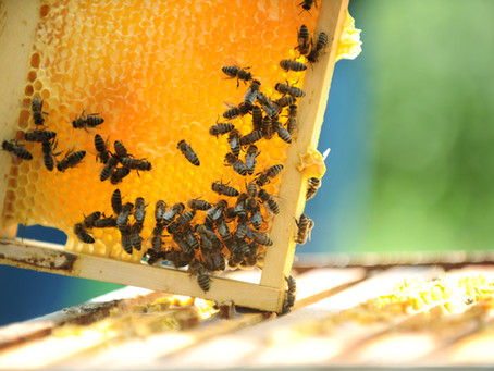 Save the Bees! Bee removal & relocation