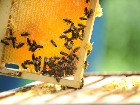 Beekeeping in the Lowcountry, Recycling Program, More at Beaufort Branch Library