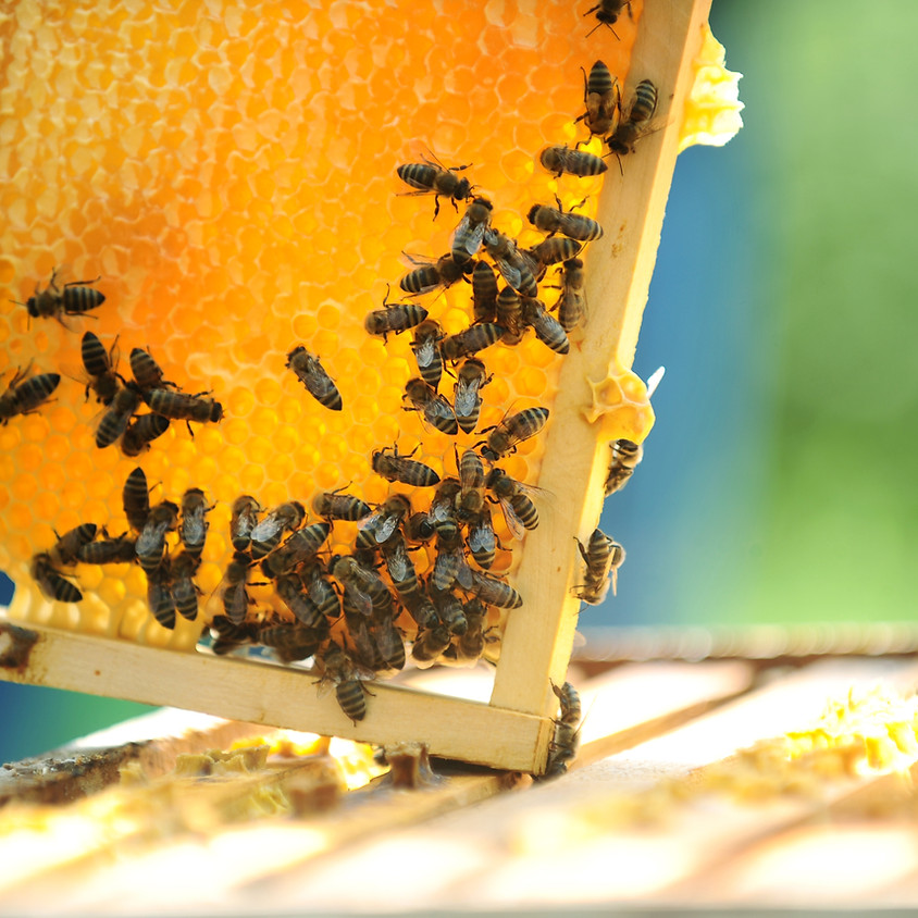 Honey Tasting in the  GoodLot Hopyard