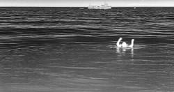 Man overboard FLIR