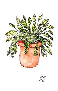 Terracota Pot DPI 200.png