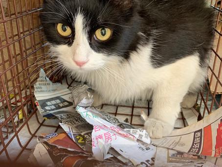 Saving Cats by Deterring Them