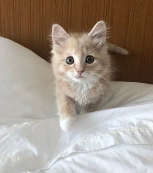 6 Things You Should Know When Bringing a New Kitten Home
