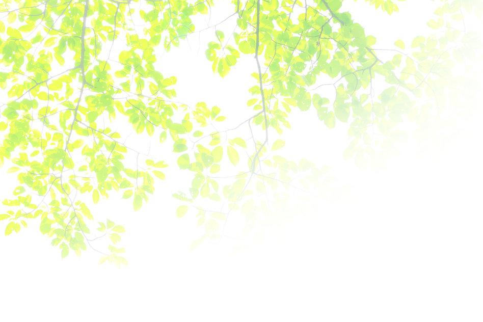 緑の葉.jpg