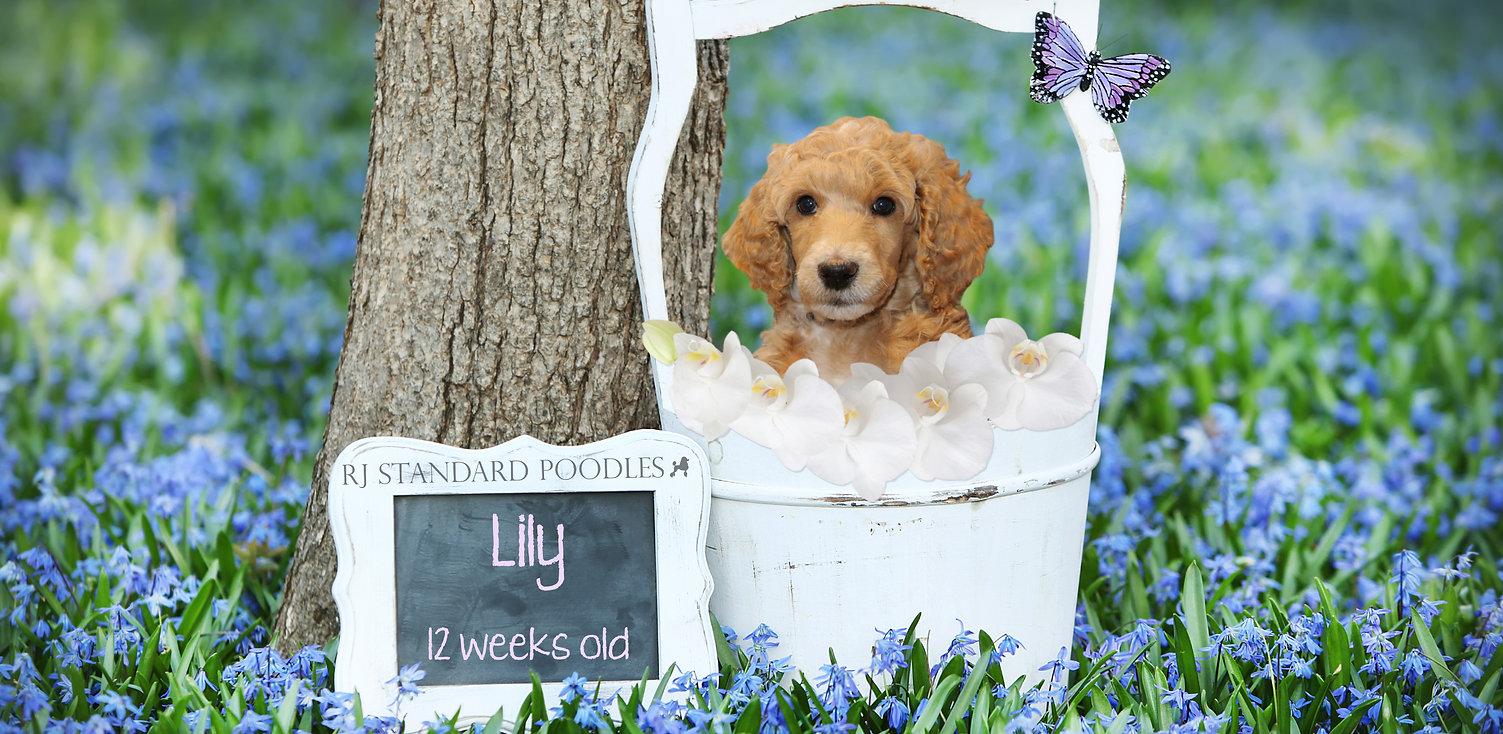 lily in bucket 2.jpg