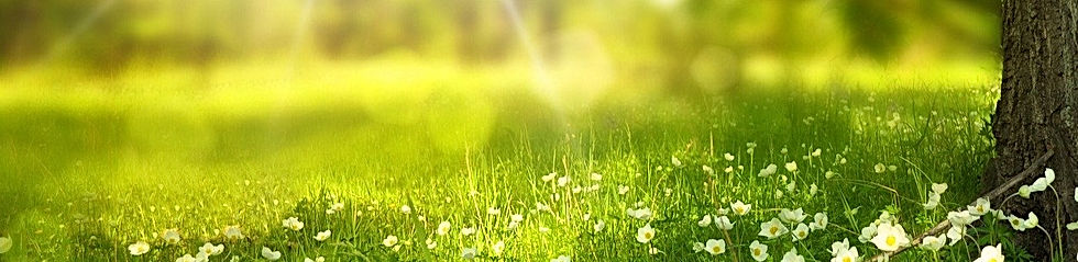 spring-276014_1920_edited.jpg