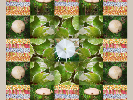 Mushroom Craze II - Lockdown Series