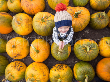 Sally, Aymen, Hugo and a pumpkin patch