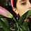Thumbnail: Beta Single Pearl Earrings