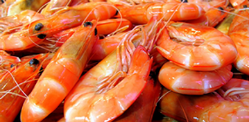 Gourmet Shop Barbados - Shrimps