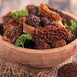 Morel mushroom.jpg