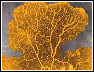 slime mold net 3.jpg
