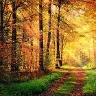 autumn_forest_display.jpg