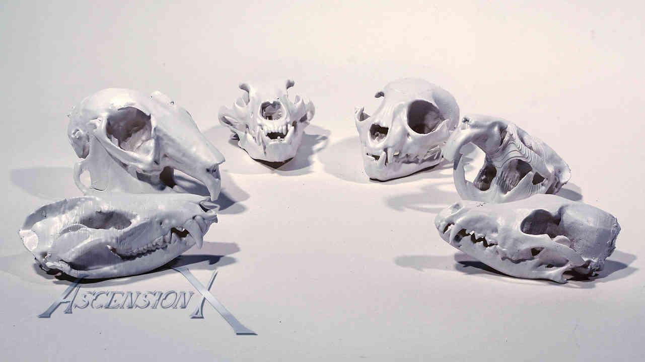 Crânes d'animaux (résine)