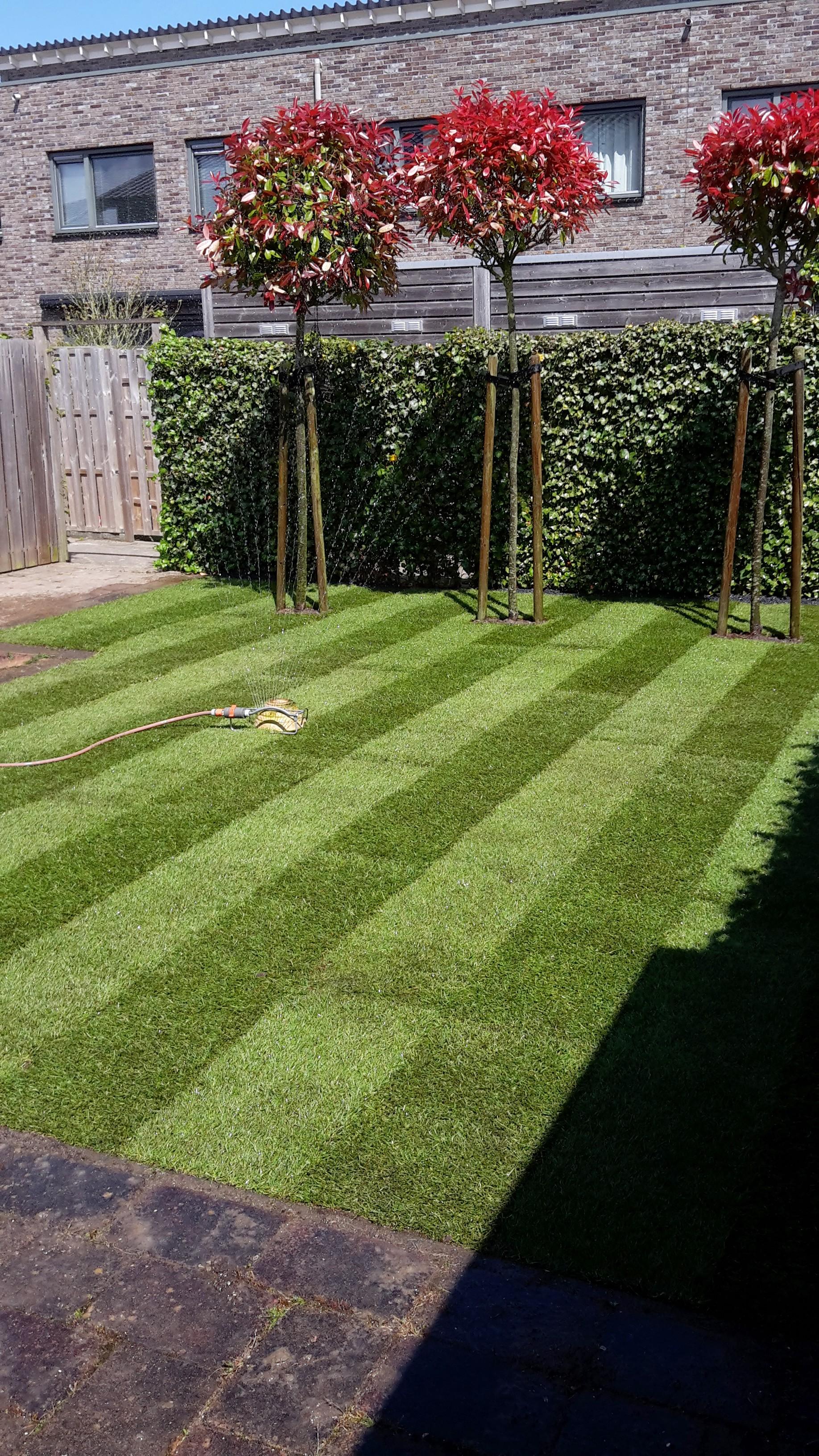 aanleg fris nieuw gras