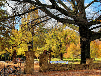 Autumn Foliage Best Spots