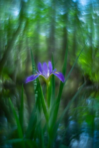 Flowers SMALL-20190311-5011.jpg