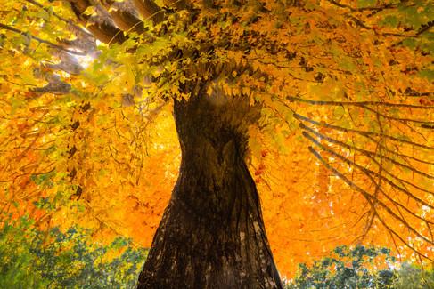 Fall Tree Swirl