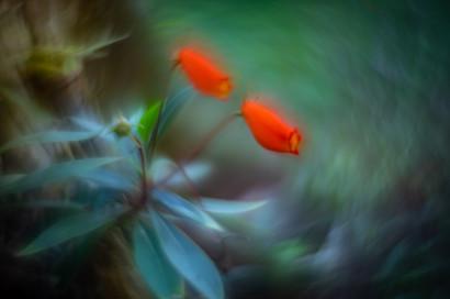 Flowers SMALL-20190311-4935.jpg
