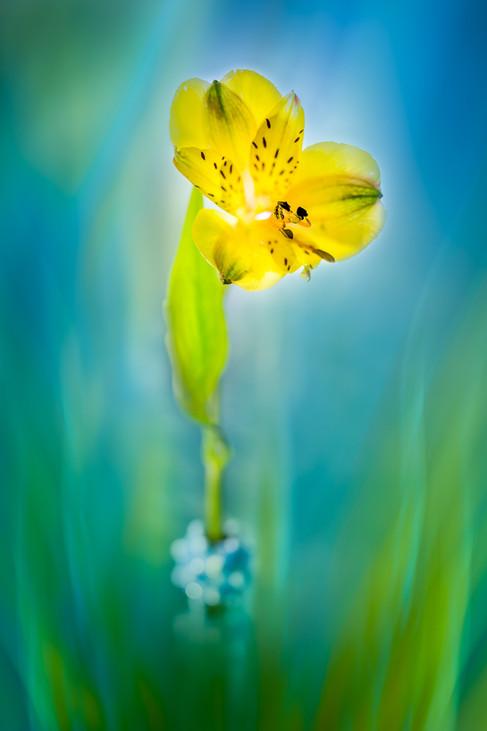 Flowers SMALL-2914.jpg