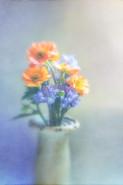 Carol untitled-9726.jpg