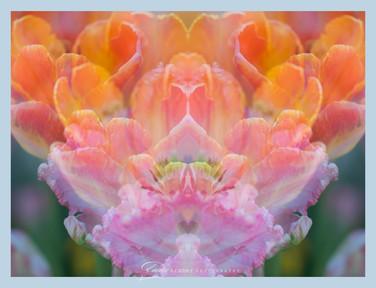 Tulip Denver Mirrors Final.jpg
