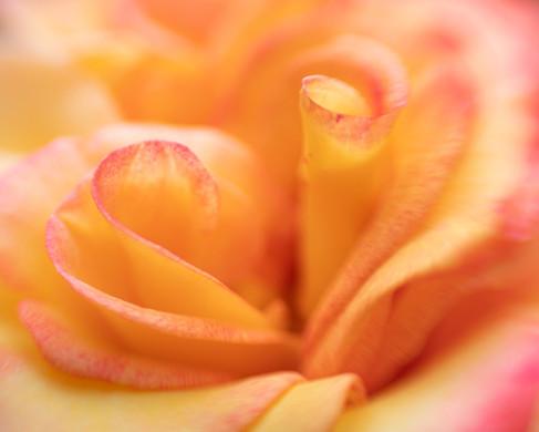Flowers SMALL-6180.jpg