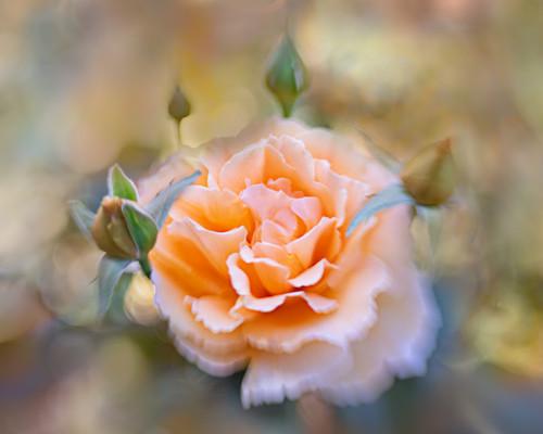 Flowers SMALL-2731.jpg
