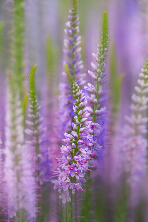 Flowers SMALL-2024.jpg