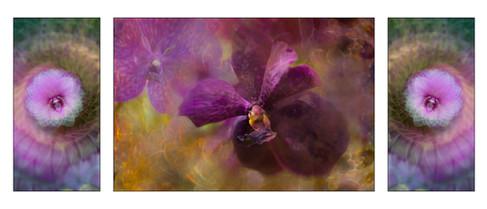 Purple Velvet Orchid Triptych.jpg