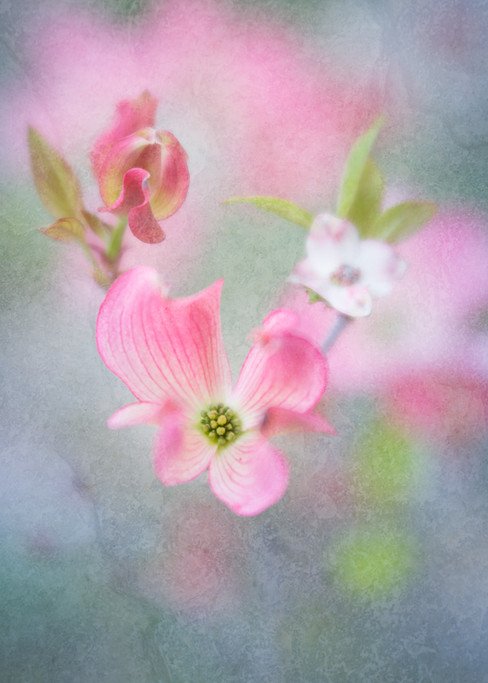 Flowers SMALL-1782.jpg
