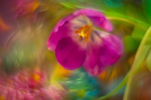 Flowers SMALL-20190213-5627-Edit.jpg