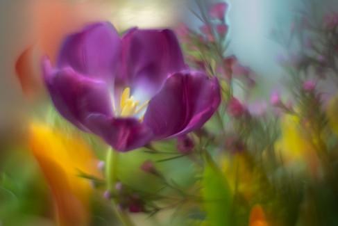 Flowers SMALL-20190214-6490-0196.jpg