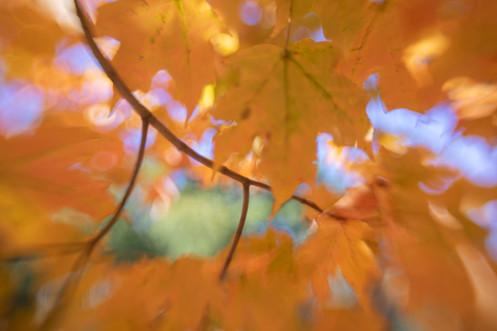 Fall Abstract