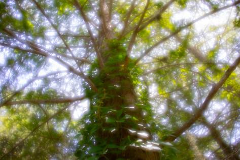 Kramer 2020 Lensbaby Velvet 28-1171.jpg