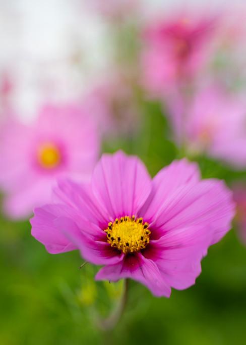 Flowers SMALL-9314.jpg