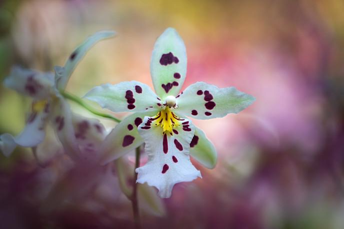 Flowers SMALL-20190315-9101-0253.jpg
