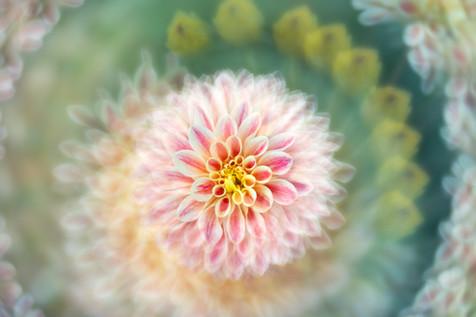 Flowers SMALL-2912.jpg