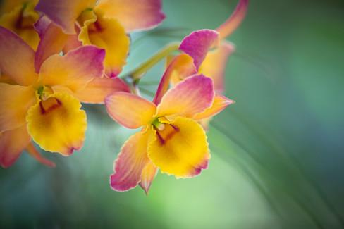 Flowers SMALL-20190314-7399-0246.jpg