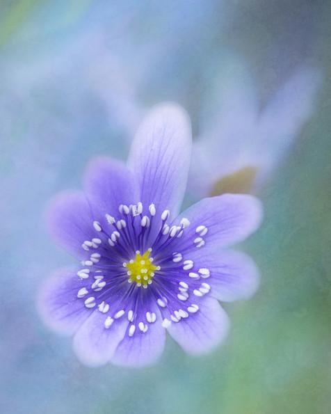 Flowers SMALL-1747.jpg