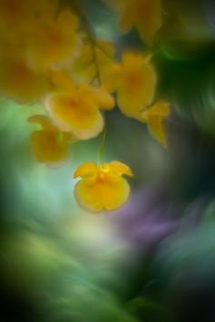 Flowers SMALL-20190314-6828.jpg
