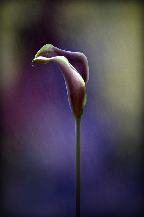 Jackie Kramer-0437.jpg