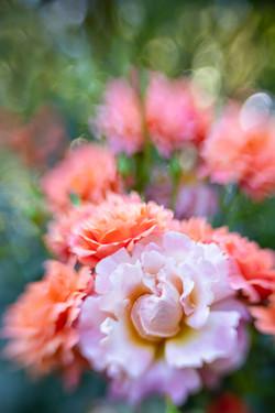 Flowers SMALL-2699.jpg