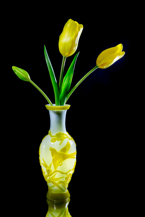 Tulip Yellow Brighter-1474.jpg