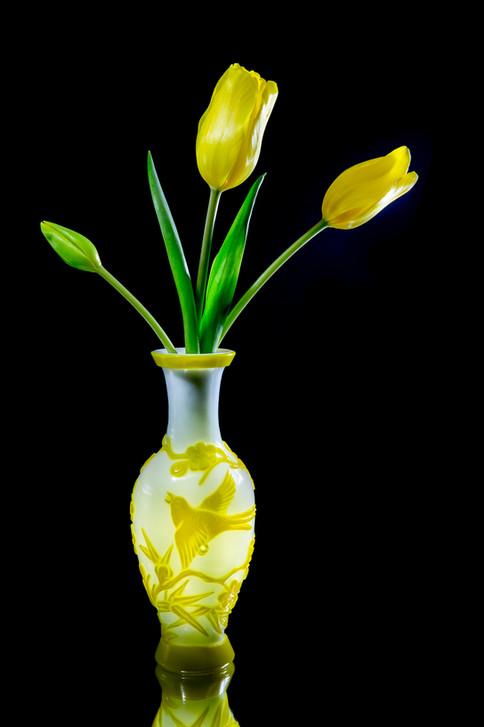 Tulip Yellow Brighter-1474.jpg