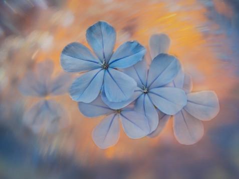 Flowers SMALL-7109289.jpg